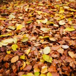 Singen und basteln im Herbst: Ihr Blätter...