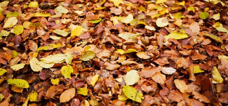 Singen und basteln im Herbst: Ihr Blätter wollt ihr…