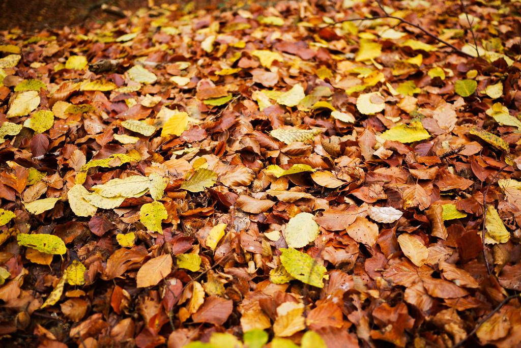Herbstgedicht: Mörike's Septembermorgen