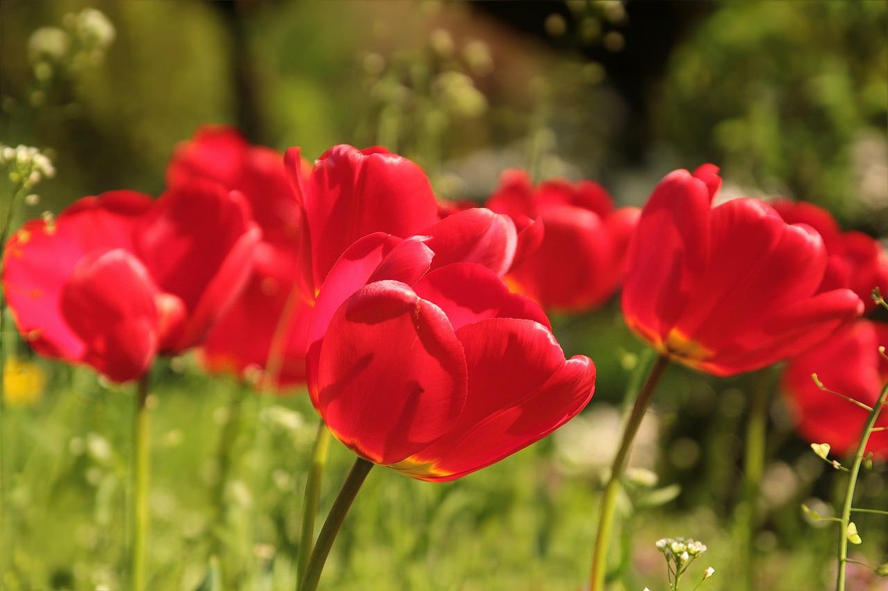 Tulpen aus Strohhalmen basteln